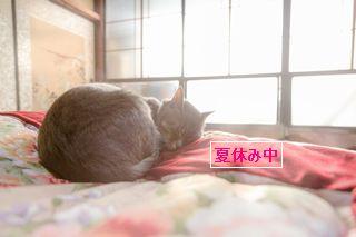 夏休み中のネコ
