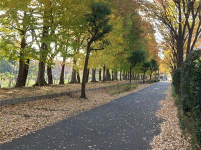 【占い通信】秋の散歩道